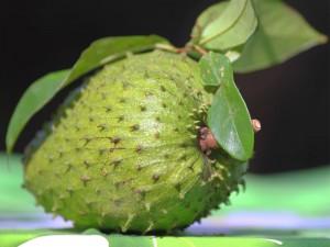 1 manfaat buah sirsak untuk kesehatan