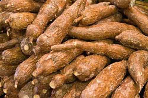 3 manfaat ubi kayu