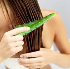 5 khasiat lidah buaya untuk rambut