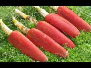 6 khasiat buah merah