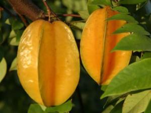 9 manfaat buah belimbing