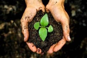 7 manfaat tanah