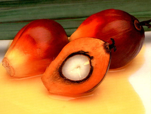9 manfaat kelapa sawit