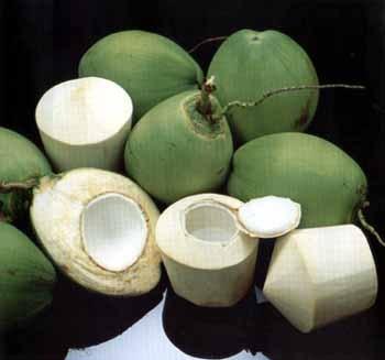 10 manfaat kelapa