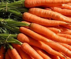 4 khasiat wortel