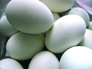 6 manfaat telur bebek