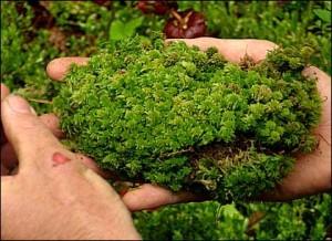 6 manfaat tumbuhan bagi manusia