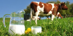 7 manfaat susu sapi
