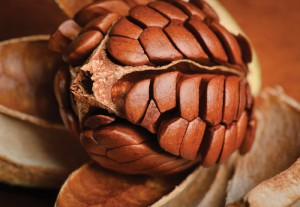9 khasiat buah mahoni