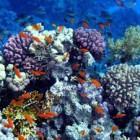 Ini Dia manfaat terumbu karang