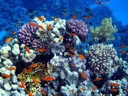 9 manfaat terumbu karang